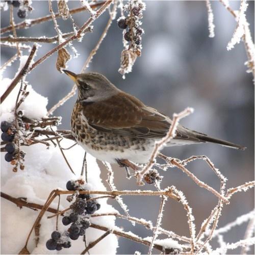 beautiful bird winter ndash - photo #39