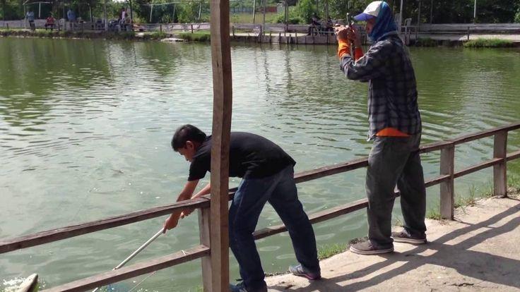 Pancing Kerapu Besar | Ikan Siakap | Ikan Jenahak | Ikan Baung | Cara Ik...