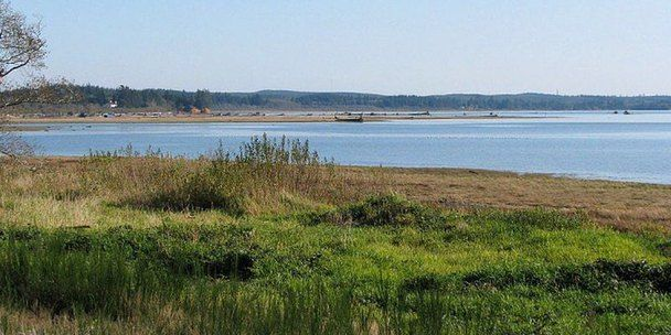 Dog Friendly Hotels Ocean Shores Wa