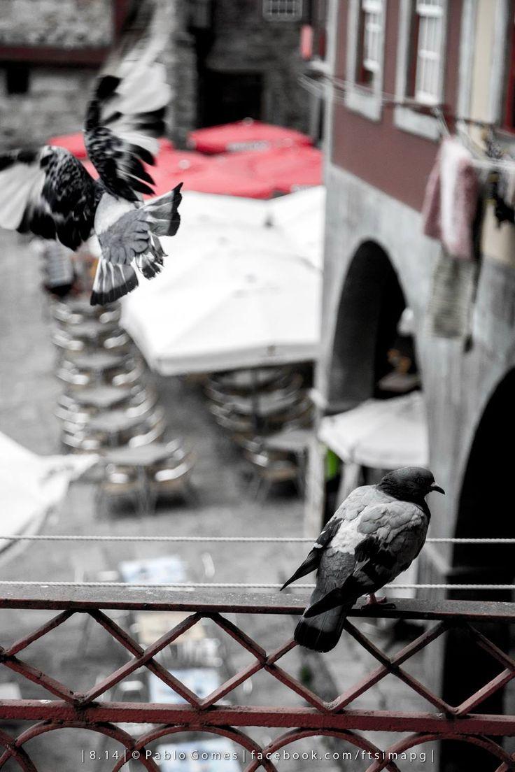 [2014 - Porto / Oporto - Portugal] #fotografia #fotografias #photography #foto #fotos #photo #photos #local #locais #locals #animal #animais #animales #animals #pomba #paloma #dove #europa #europe