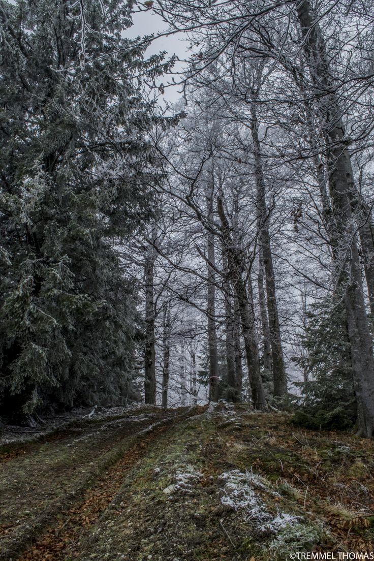 a winter landscape by tremmel thomas on 500px