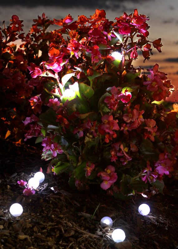 """Fairy Berries LED Lights (3/4"""" diameter """"berries"""" with tiny white LEDs inside & will float in the pool)"""
