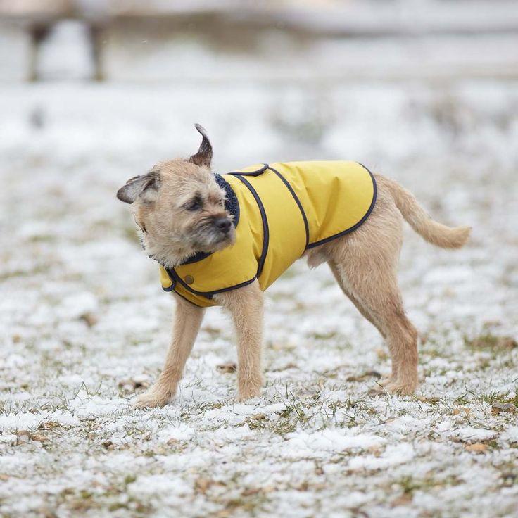 Fetch And Follow Winter Jacket Yellow Dog Dog Winter Coat