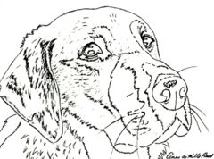 yellow lab colored pencil project kit how to draw