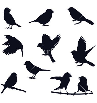 Bird silhouettes vector