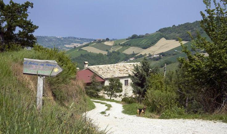 Bauernhof Il Podere del Nonno Ripatransone - (Ascoli Piceno) - Marken