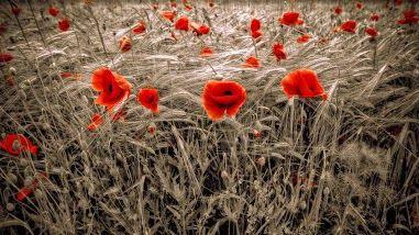 Eternità.  Tra un fiore colto e l'altro donato l'inesprimibile nulla.   Giuseppe Ungaretti