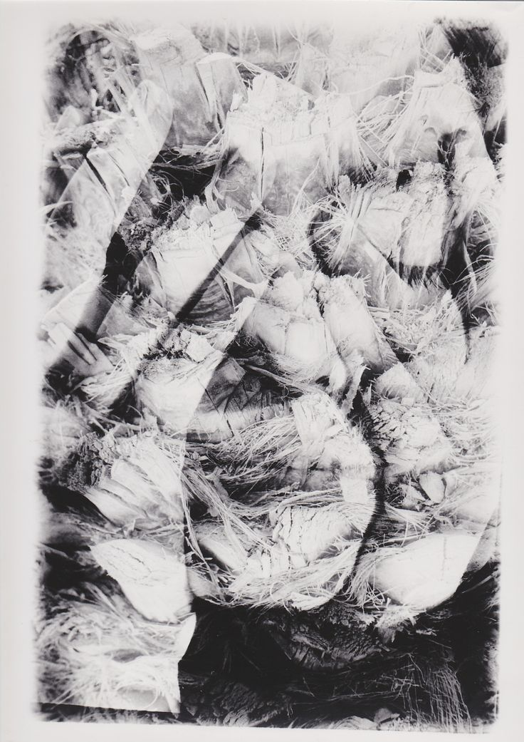 Fotografie von Julia Pust #Handabzug #Dunkelkammer #Sandwich http://www.junique-photography.com/