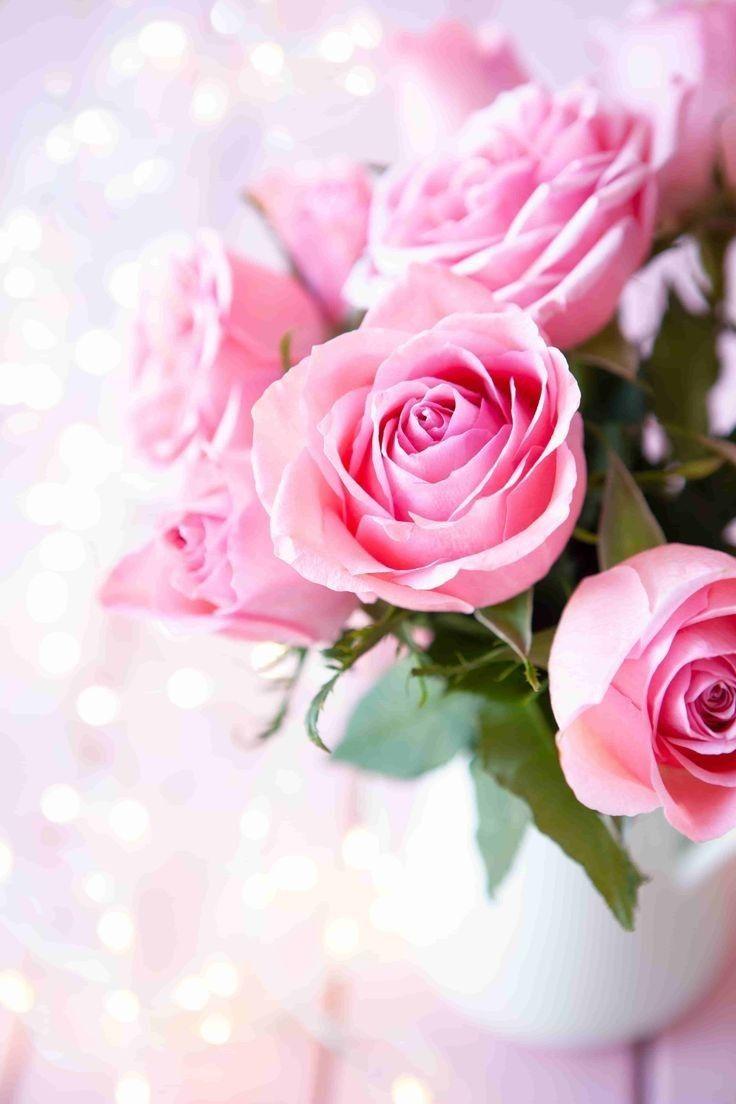 Rose Wallpaper For Mobile Phone In 2020 Rose Images Pink Rose Flower Pink Flowers Wallpaper