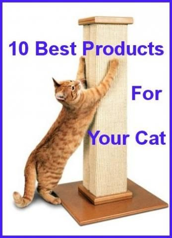 10+ Best Products For Your Cat ... Sold On Amazon...see more at PetsLady.com -The FUN site for Animal Lovers