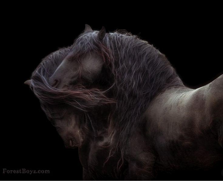 Horses | TheSpectrumWorkshop.com • Prints & Artist Designed Goods Inspired by Life's Adventures