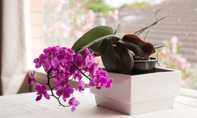 И Ваша орхидея будет цвести круглый год. 7 ВАЖНЫХ СЕКРЕТОВ по уходу за орхидеями.