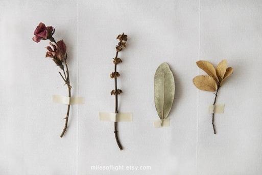 botanical photographBotanical Illustration, Minimal Nature, Study N5, Flora Study, Nature Collection, Dried Flowers, Nature History, Botanical Art, Dry Flower