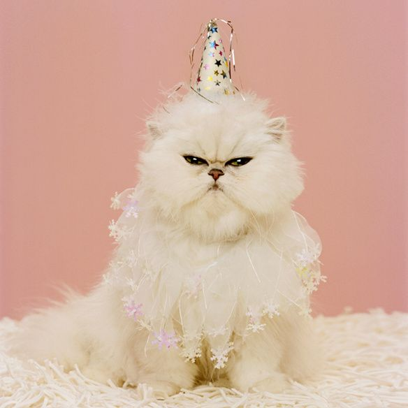 Happy Birthday Cat We Heart It: 23 Best Birthday Cats! Images On Pinterest