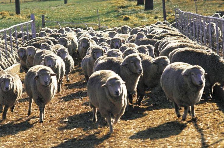Terrific read on the falsehood of herd immunity.