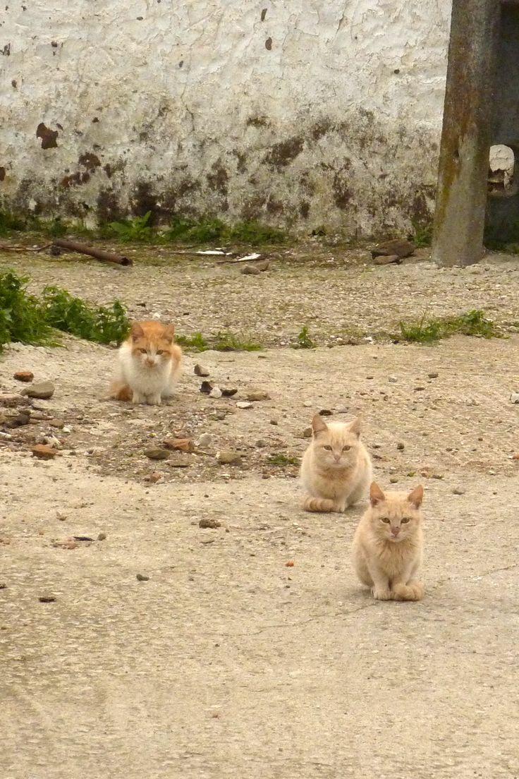 File:Algarve - kittens (13365811344).jpg - Wikimedia Commons I love kittens! More pics like this on the website. Click the link