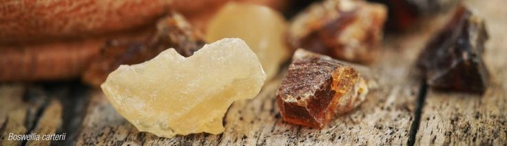 Frankincense essential oil is used in aromatherapy as nerve calming and to help relieve cold and cough symptoms. Used in traditional Chinese and Indian medicine and in Ayurvedic medicine for years, Indian Frankincense essential oil is used in aromatherapy to calm the nerves and to treat coughs and colds.