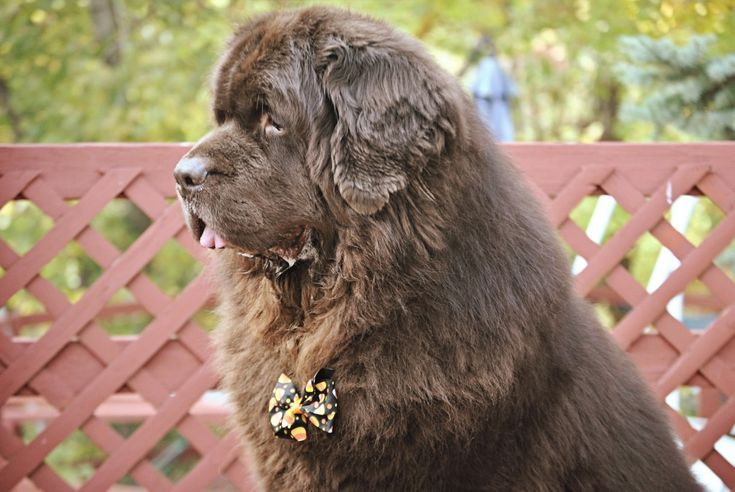Muscle Man - mybrownnewfies.com