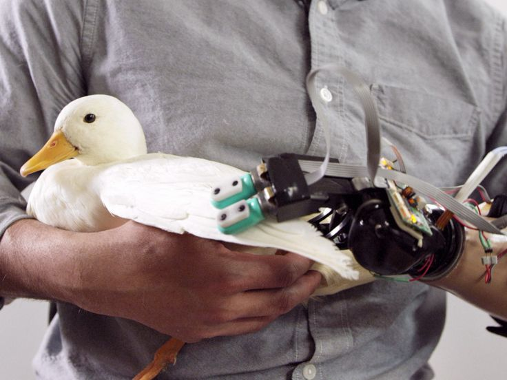 """""""Prosthetics with BioTac robotic fingers can sense the fluffiness of a bunny and the fragility of an egg."""""""