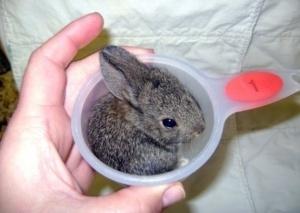 Photos of cute little animals