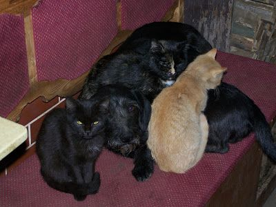 Újdonság: A hideg nagy úr!, http://kertinfo.hu/a-hideg-nagy-ur/, ezekben a témakörökben:  #kutya #macska, írta: Faluvégi kurta porta