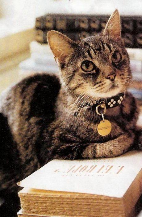 Cuida a tu gato. Ponle su placa de identificación.