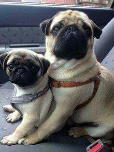 Aww!! Too cuuute!! I wanna have em!!