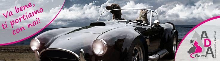 Portfolio per Associazione Difesa degli Animali, A.D.A. di Gaeta. Portare il gatto o il cane in vacanza: consigli e normative  www.adagaeta.it/portare-gatto-cane-vacanza-consigli-normative/