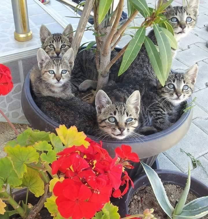 A group of beautiful cats sitting in a garden planter. Love the red accent flowers!