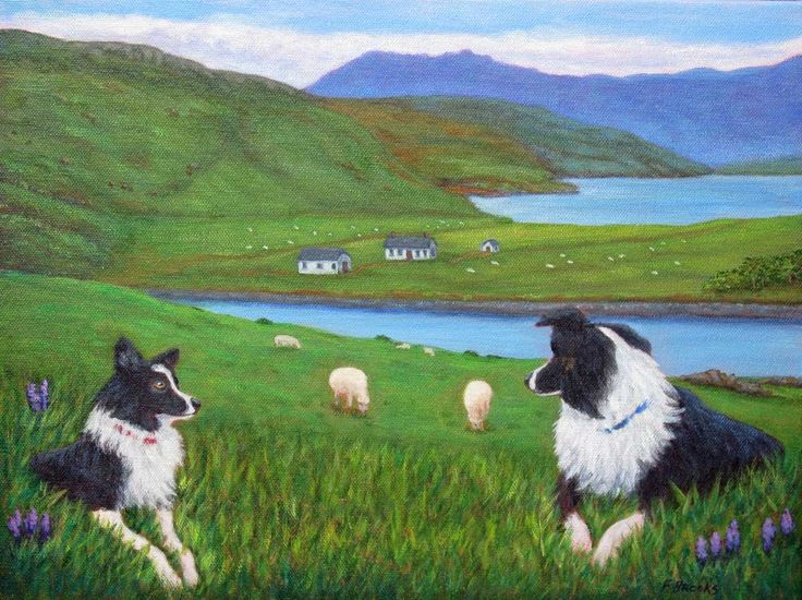"""Skye Watch"" with Border Collies watching sheep on the Isle of Skye, Scotland, from an original painting by North Carolina artist, Fran Brooks. This painting was donated to East Tennessee Border Collie Rescue auction fundraiser.  www.artistnannie.com"