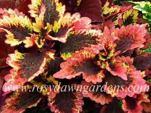 ideas about Plant Catalogs on Pinterest Companion planting