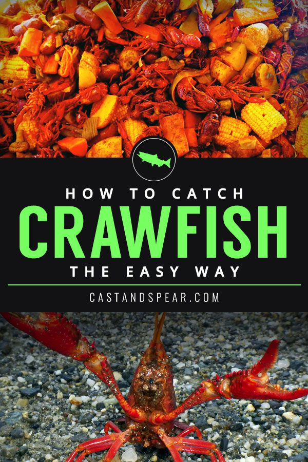 Learn How To Catch Crawfish In 2020 Crawfish Traps Crawfish Freshwater Lobster