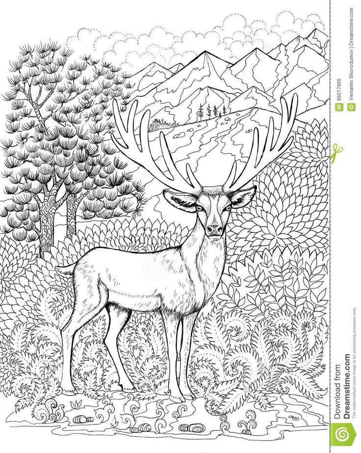 294 best coloring deer images on pinterest adult for Deer coloring pages for adults