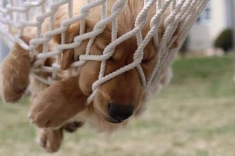 Just hanging out... and a little bit stuck...