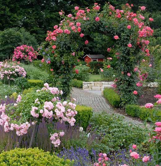 Шаг 8. Теперь вернитесь к розовому кусту, возьмите розу в ладони, наклонитесь, и пусть роза касается вашего лица.
