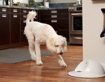 Win a free CleverPet for your dog!
