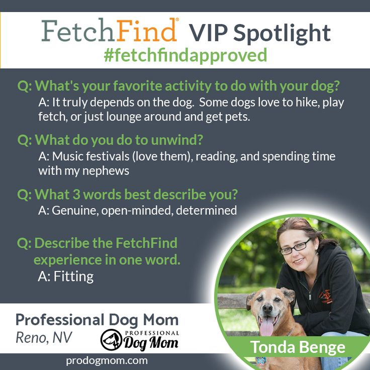 Fetchfindapproved Business Professional Dog Mom Of Reno Nevada