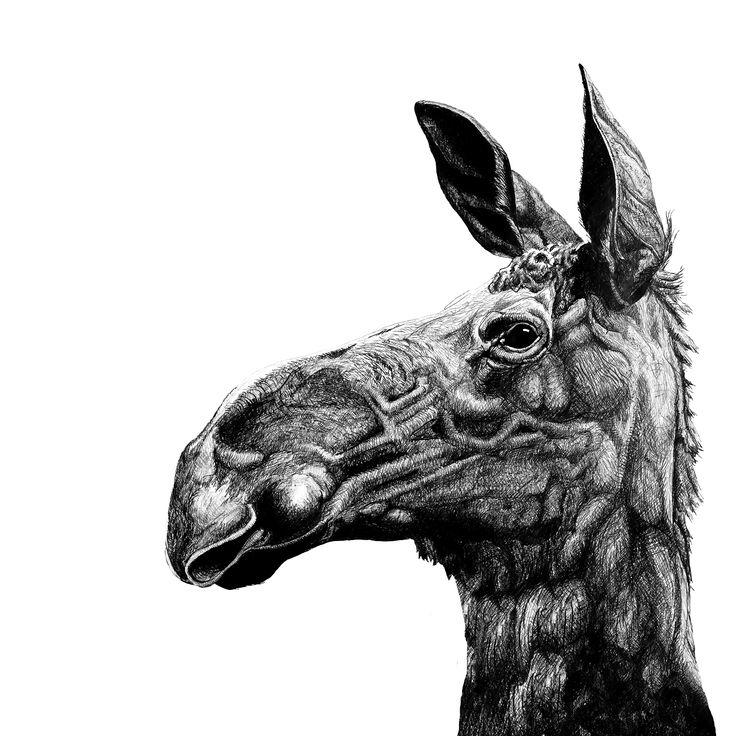 #moose #female #älg #elk #elg #illustration #moosekiss #pencil #sweetheart #mylove // #elch #elin #zeichnung #elchkuss #bleistift #meineliebe