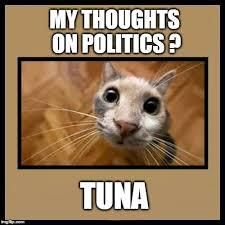 A Labour candidate promised free tuna for all cats in this street, = that's one paw mark vote in the bag