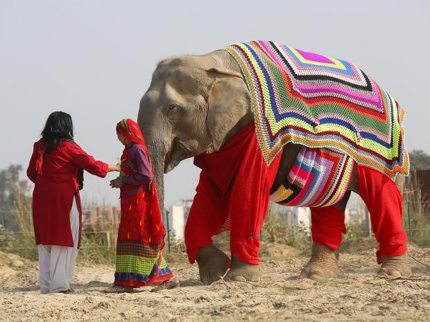 Elephants in India are sporting colourful woollen jumpers after villagers knitted the super-size garments to protect the animals from near-freezing temperatures. Women in a village near the Wildlife SOS Elephant Conservation and Care Centre in the northern city of Mathurareportedly began producing the colourful, pyjama-like garments after staff at the centre warned temperatures were approaching sub-zeroat night.
