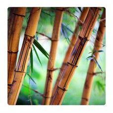 Barna bambusz ágak falikép
