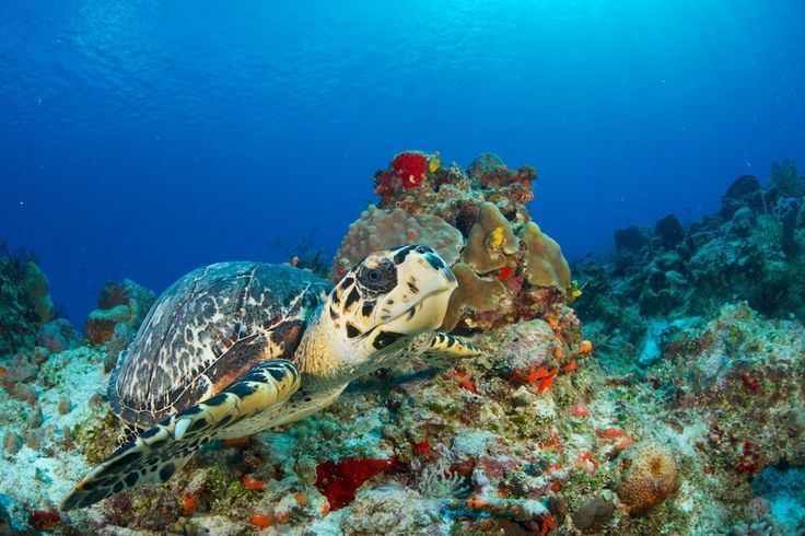 #OurFavouritePlaces snorkelling in Cozumel, Mexico