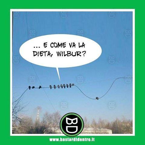 Quanto fa innervosire questa domanda? Tagga i tuoi amici e #condividi #bastardidentro #dieta #uccelli www.bastardidentro.it