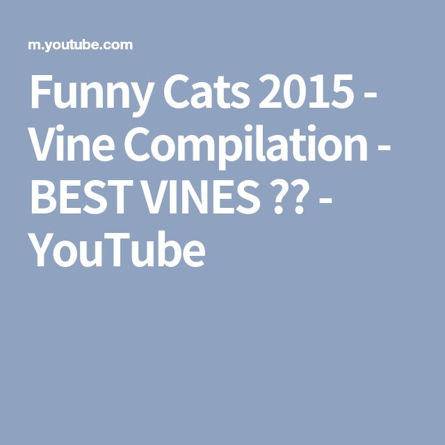 Funny Cats 2015 - Vine Compilation - BEST VINES ✔️ - YouTube