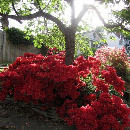 23 best images about plants for under trees on pinterest for Best flowers to grow in california