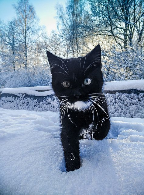"""raccaryusui: """" cybergata: """" 12 weeks old and his first snow! by astielau on Flickr. """" (^_^) """""""