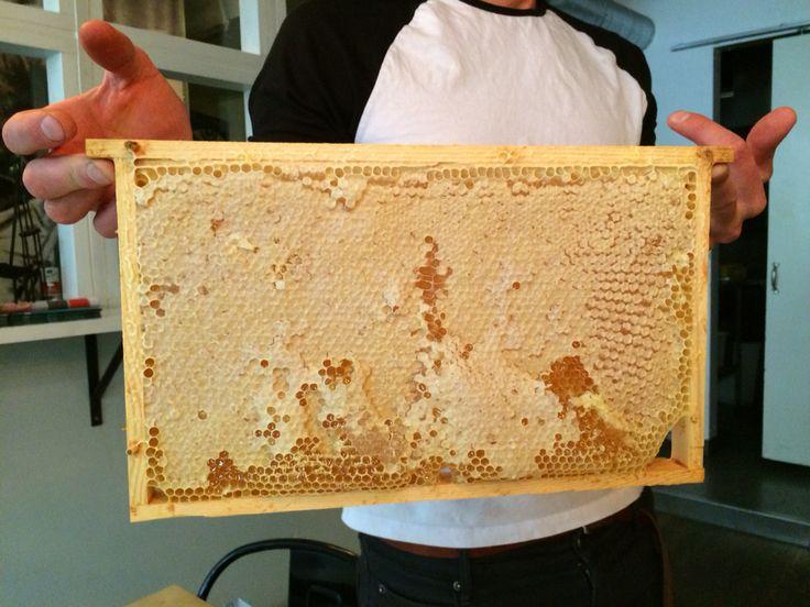 #honey #honungsbiet