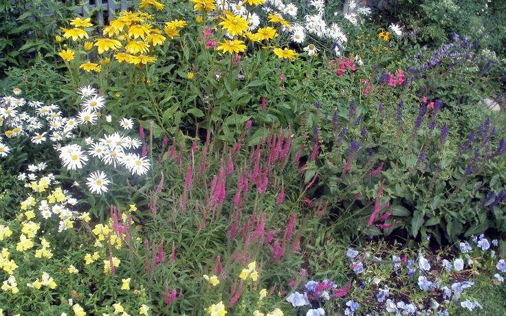 9bcb24d8ba4d2b4b7e2128b0a6732675 Native Wildflower Garden Designs on wild garden design, herb garden design, cactus garden design, organic garden design, sand design, gravel design, small garden design,