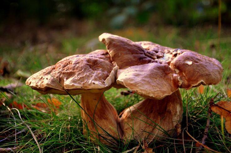 Wild Mushroom by FerryTjan