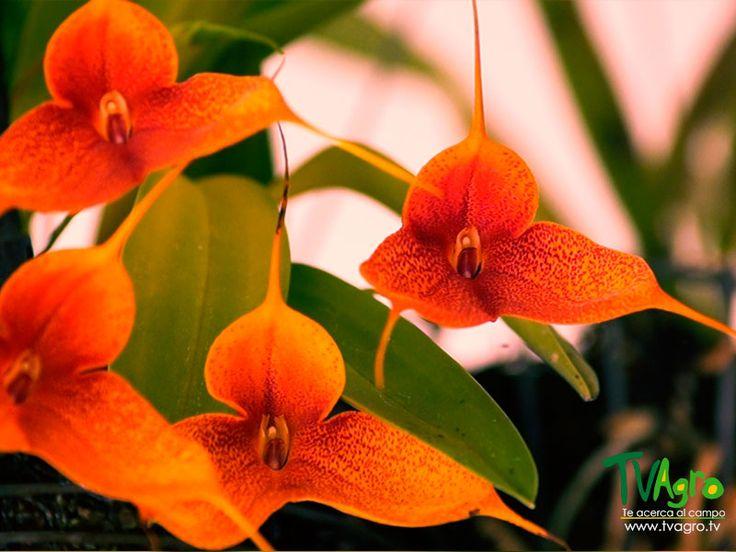 Aroma y Color: Orquídeas